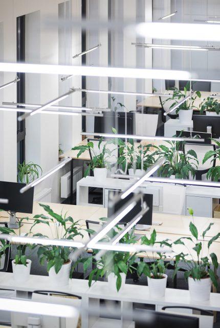 Zeleň v kanceláři