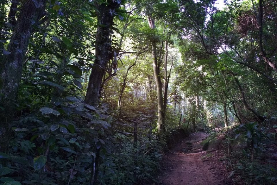 Projekt Lesní svět nabízí interaktivního průvodce lesními stezkami